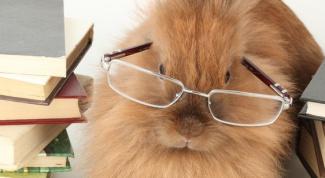 How to distinguish decorative rabbit