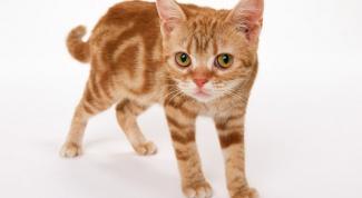 Как лечить уши у кота