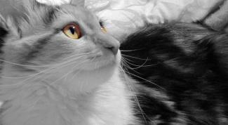 Как определить, котенок - девочка или мальчик