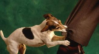 Как избавиться от аллергии на собак