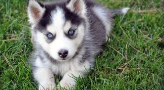 Как зарегистрировать питомник собак