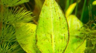 Как избавиться от бурых водорослей