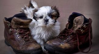 Как смотреть за щенком