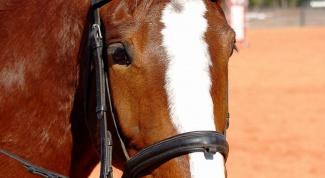 Как сделать маску лошади