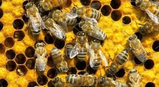 Как водить пчел