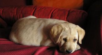 Как научить щенка месту