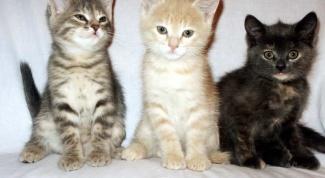 Как лечить котенка от простуды