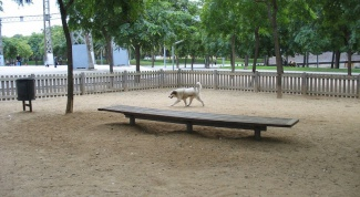 How to equip a Playground for dogs