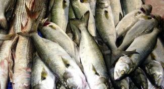 Как определить свежую рыбу