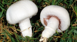 Mushrooms: how to grow them at home
