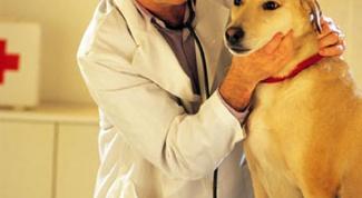 Как лечить суставы у собак