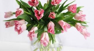 Какие цветы дарят на 8 марта в 2018 году