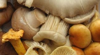 Как хранить соленые грибы