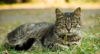 Какие нужны прививки кошке