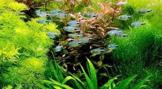 Как выбрать растения для аквариума