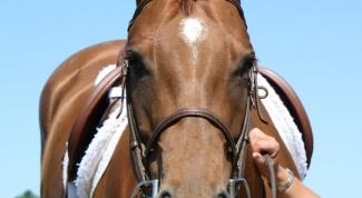 Как оседлать коня