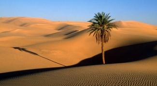 Как спастись в пустыне