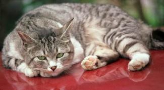 Как лечить отравление у кота