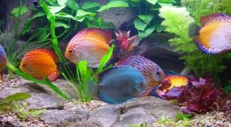 Как выбрать грунт для аквариума