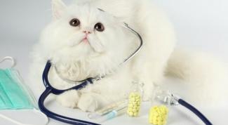 Стерилизация кошки. Как ухаживать за прооперированным животным