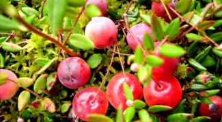 How to grow a garden cranberry