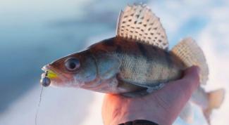 Как ловить судака зимой на тюльку
