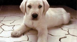 Как назвать щенка алабая