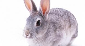 Как разделать тушку кролика