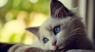 Как определить болезнь кошки
