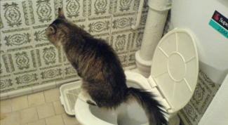 Как отучить кота метить на дверь