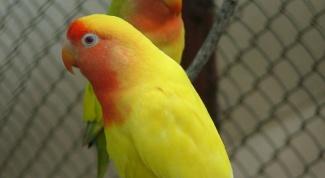 Как мыть клетку попугая