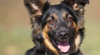 Как избавиться от боязни собак