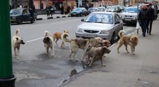 Как защититься от бродячих собак