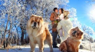 Как найти любовь на Новый год