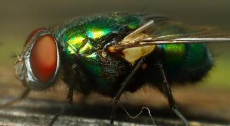 Как избавиться от комнатной мухи