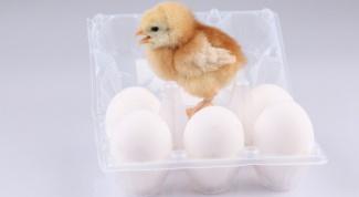 Как заработать на яйцах