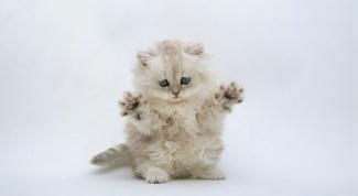 Как защитить стены от кошки