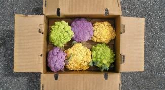 Как и сколько варится цветная капуста