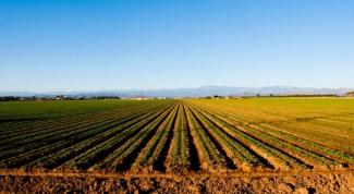 Как начать бизнес в сельском хозяйстве