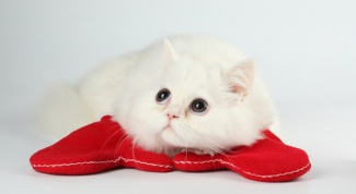Как прекратить лактацию у кошки