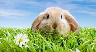Как сделать укол кролику