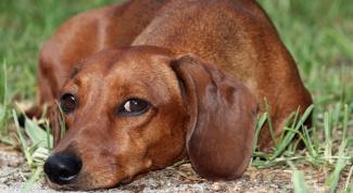 Как отучить собаку грызть провода