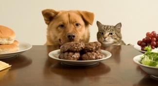 Как отучить собаку попрошайничать