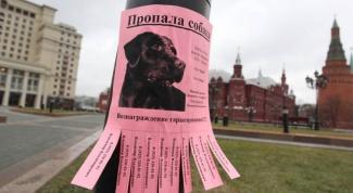 Как написать объявление о пропаже собаки