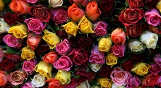 How to determine the freshness of roses