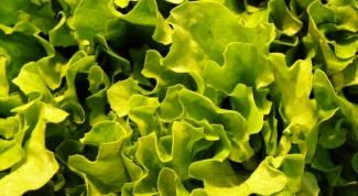 Как сохранить свежий салат