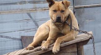 Как выбрать сторожевую собаку