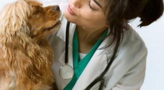 Как измерить давление у собаки