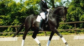 Как научить лошадь выездке