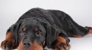 Выбор собаки: как сделать правильно